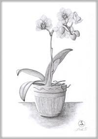 Die geschenkte Orchidee