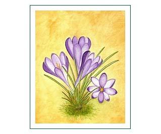 Frühlingsaquarell Krokus